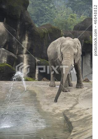 動物園的大象 46848812