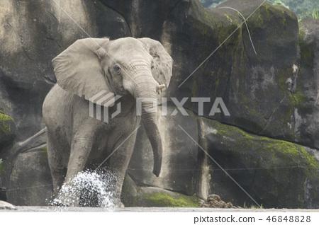 動物園的大象 46848828