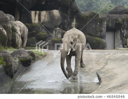 動物園的大象 46848846