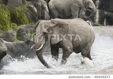 動物園的大象 46848853