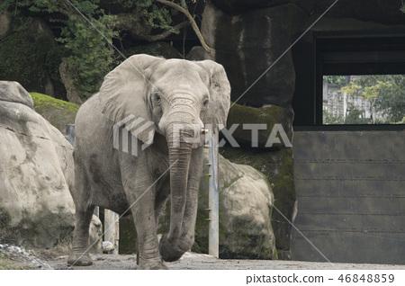 動物園的大象 46848859