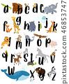bear cat dog 46853747
