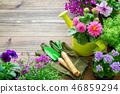 Seedlings of garden plants, flowerpots of flowers. 46859294