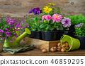 Seedlings of flowers, bulbs of plants, tools. 46859295