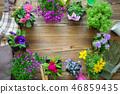 Seedlings of flowers. Garden equipment. 46859435
