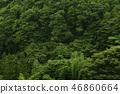 森林 树林 自然 46860664