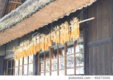 Dried corn under the eaves of old houses 46873000