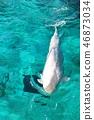 Silk dolphin 46873034
