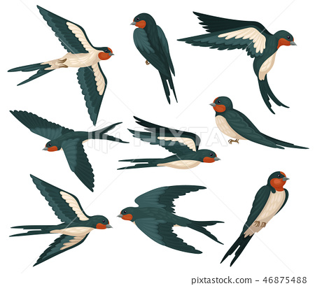 Flying swallow birds in various views set, flock of birds with colored plumage vector Illustration 46875488