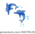 돌고래 2 마리 46879528