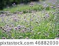 花朵 花卉 花 46882030