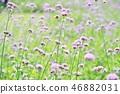 花朵 花卉 花 46882031