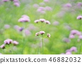 flower, flowers, southern countries 46882032