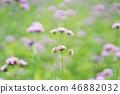花朵 花卉 花 46882032