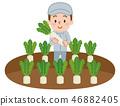 農民蘿蔔田 46882405