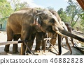 zoo, safari park, sightseeing 46882828