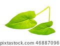 Green leaves of flowers and plants isolated 46887096