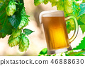 Glass of beer and hops in a hop field 46888630