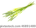 Grass stems Phleum 46891489