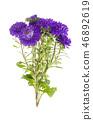 Bouquet of autumn violet asters 46892619