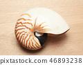 鸚鵡螺 46893238