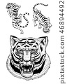 Asian tigers in vintage japanese style for logo. Face Close up. Wild animals cats. Predators from 46894492