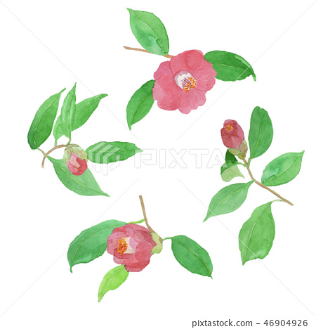 Camellia japonica camellia 46904926