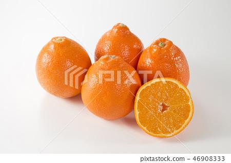 미네 오라 오렌지 46908333