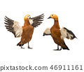 bird birds waterfowl 46911161