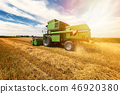 Harvesting wheat harvester on a sunny summer day 46920380