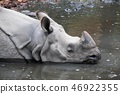 Rhinoceros into the water 46922355