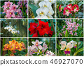 Collection of rare varieties of orchids. 46927070