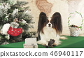Papillon dog is playing with donated toy near the New Year tree 46940117