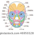 面部肌肉的名稱 46950328