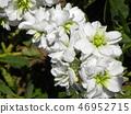 股票 花朵 花卉 46952715