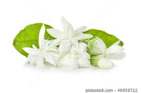 Jasmine isolated on white background 46958722