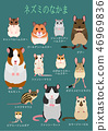 쥐의 동료 애완 동물 목록 46969836