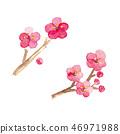ume, japanese apricot flower, an ume flower 46971988