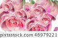 floral, pink, rose 46979221