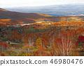 maple, yellow leafe, autumn 46980476
