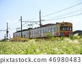 sangi railway, buckwheat field, inabe city 46980483
