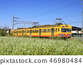 sangi railway, buckwheat field, inabe city 46980484
