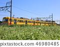 sangi railway, buckwheat field, inabe city 46980485