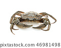 Crab. Black sea crustacean isolated on white background 46981498