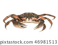 Crab. Black sea crustacean isolated on white background 46981513