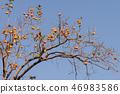 植物 其它植物 树 46983586