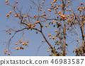 植物 其它植物 树 46983587