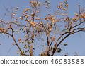 植物 其它植物 树 46983588
