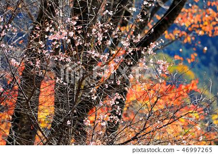 城峯 공원의 겨울 벚꽃 03 46997265