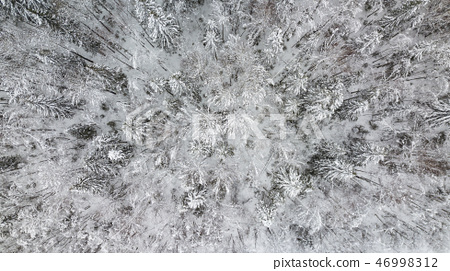 Top down aerial view over the tops of frosty forest. 46998312